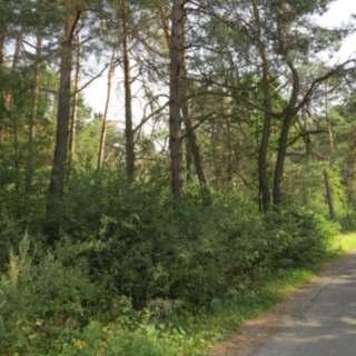Działka leśna w gminie Olkusz